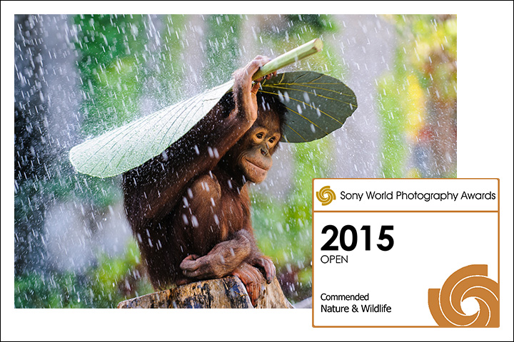 Andrew Suryono 2015 Sony World Photography Award Commended Nature & Wildlife