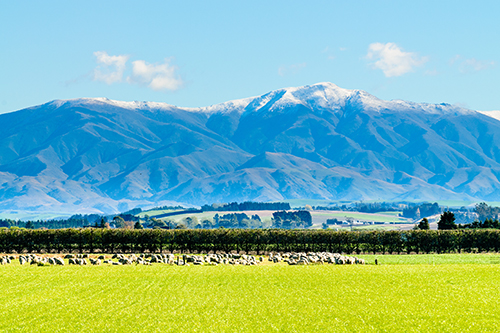 Beautiful Scenery in Rural New Zealand